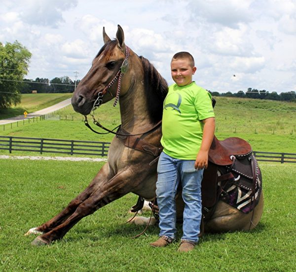 "Smokey ""The Wonder Horse"" 13"